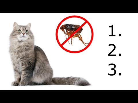 Az enterobiasis megelőzése kizárja a tesztet