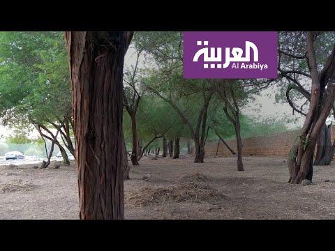 العرب اليوم - شاهد: هذه عقوبات الاحتطاب الجائر في السعودية