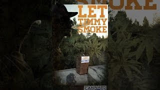 Let Timmy Smoke