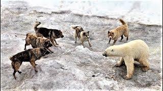 SCARIEST Arctic Animals