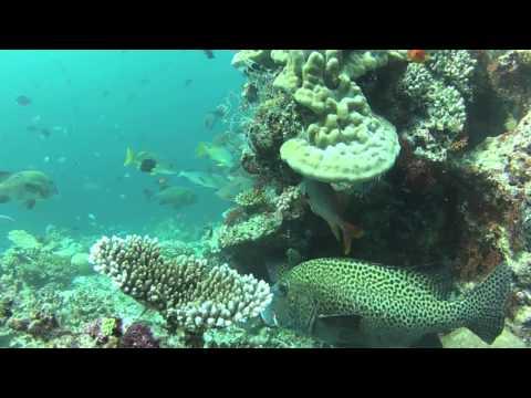 ELLAIDHOO - MALEDIVEN 2013, Ari Atoll,Malediven