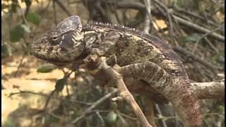 Chameleon Pi Old Worlds Best Of All