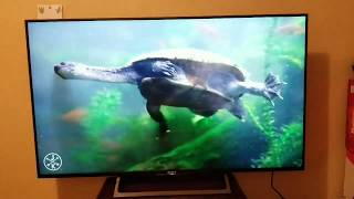 Unboxing Sony -55inch Smart - 4K Ultra HD TV with High Dynamic Range X800E