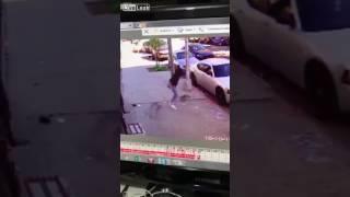 Хозяйка пытается защитить собаку от нападения кошки Приколы 2017