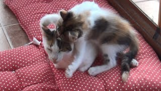 Hyperactive Kittens Finally Drove The Mother Cat Crazy!!