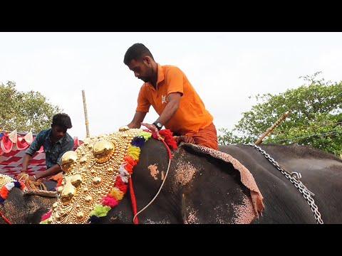 mp4 Decoration Elephant, download Decoration Elephant video klip Decoration Elephant