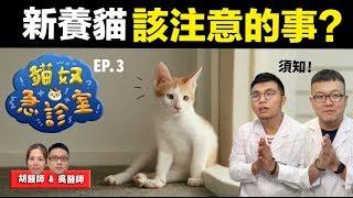 【新養貓該注意的事?】貓奴急診室EP.3 志銘與狸貓