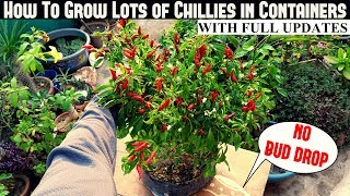 How To Grow Chillies in Containers (NO FLOWER/BUD DROP)