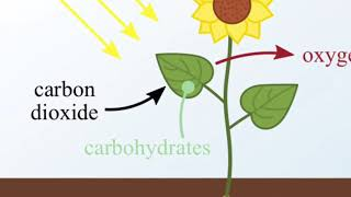 Artificial Photosynthesis Created