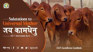 जय कामधेनु नमो नमः | Gopashtami Special (2/2) | Awareness Byte | Swami Vigyananand Ji | DJJS Satsang