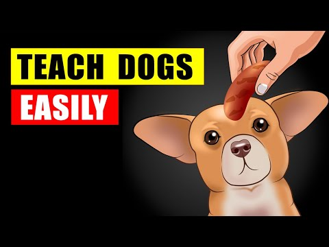 Teach Your Dog How Not to Bark and Other Helpful Tricks