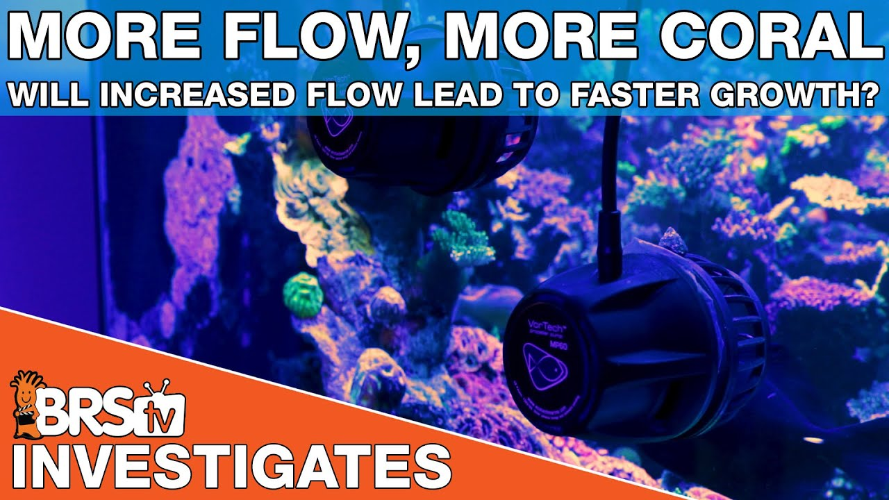 Aquarium powerheads, testing how much water flow for a reef tank - BRStv Investigates