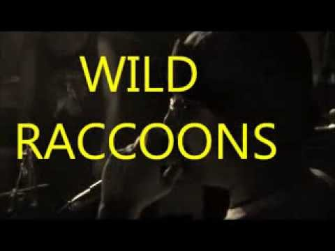 Robot Hilarious 2013 Wild Raccoons LIVE at the Mutiny!!