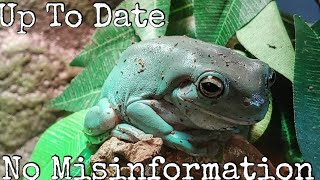 Whites Tree Frog Care Guide 2020