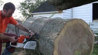 Stihl MS880 In Big Oak