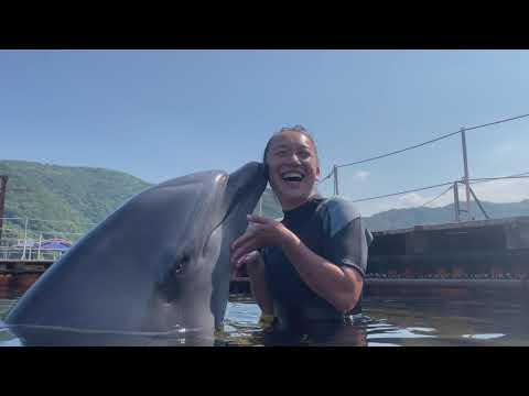 期間限定企画「イルカと泳ごう!スペシャル」【つくみイルカ島】