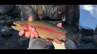 Urban Fishing the Blue River in Breckenridge Colorado