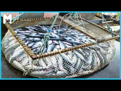 Kỹ thuật nuôi cá hồi ở Mỹ