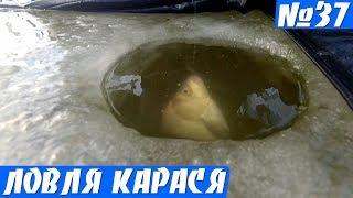 Ловля карася из подо льда