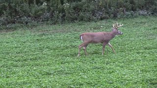 Morning and Afternoon Deer Hunting Strategies