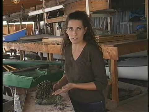 Video Zebra Mussels, Gobi Fish, and the Great Lakes