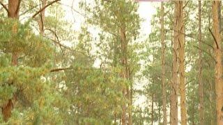 В третье воскресенье сентября в России традиционно отмечается день работников леса