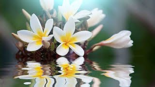 """Peaceful Music, Relaxing Music, Instrumental Music, """"For a Moment Still"""" by Tim Janis"""