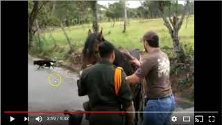 Poor Horse Screams For Help - No Stupid Humans Are Listening - Ignorance Is The New Norm In Horses