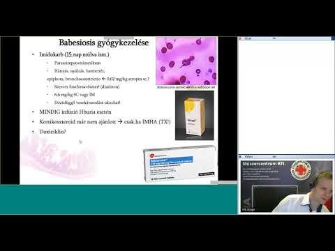 Hogyan kell kezelni a HPV vírust