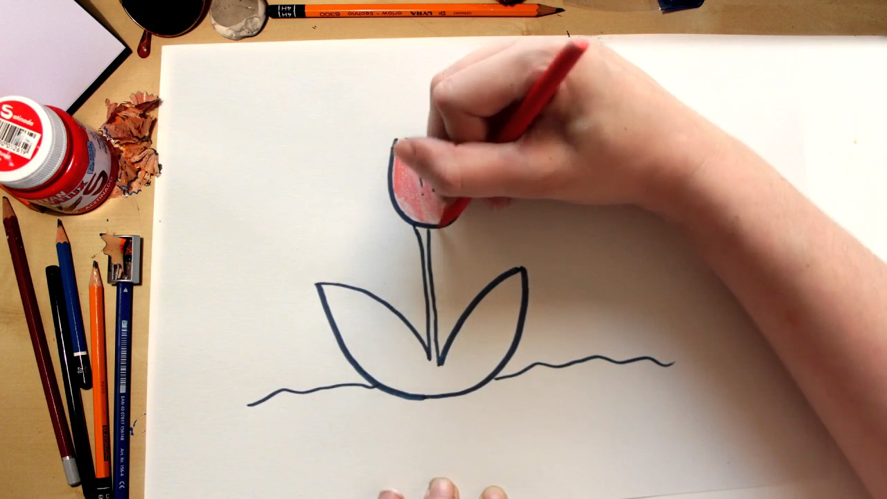 Como dibujar la flor Tulipán (comentado)