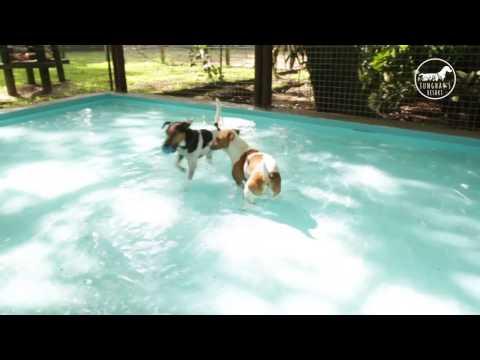 Tunghat's Resort: Novo espaço para cães pequenos