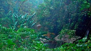 RAIN IN THE WOODS & BIRDS   White Noise For Relaxation, Tinnitus or Sleep   10 HOURS