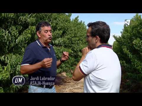 Fotograma del vídeo: Alternativas al cultivo de la fruta de hueso