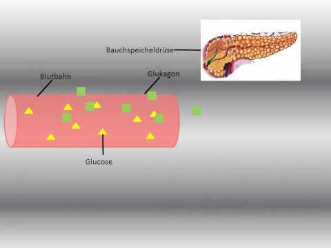Ob es möglich ist, die Samen in Typ-2-Diabetes zu verwenden