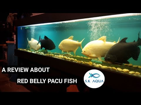 Aquarium Fish in Kolkata - Latest Price & Mandi Rates from Dealers