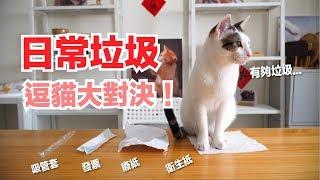 貓最愛垃圾!第一名竟然是?【好味貓日常】EP42