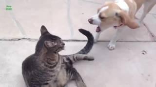 Животные чудят, игры драки котов и собак