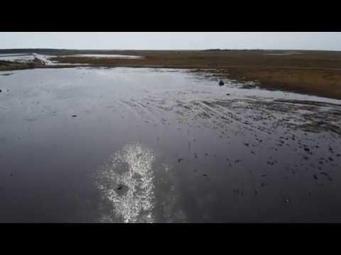 Overflyvning af svaner