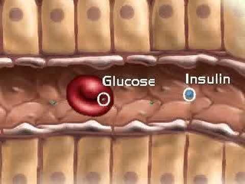 Le diabète est la liste des médicaments gratuits