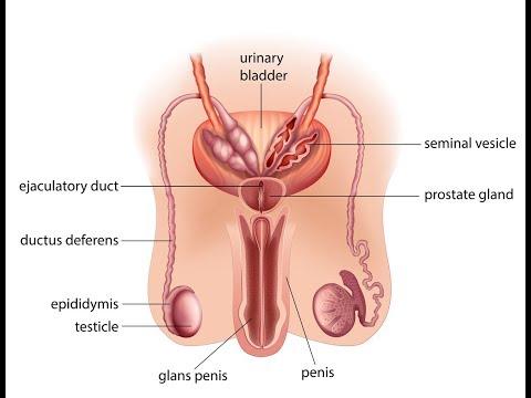 prostata upala liječenje