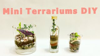 DIY TERRARIUM BY INDIAN PLANTS, MINI GARDEN IN BOTTLE, GLASS, CUP WITH LAYERING FOR FREE BY PRIYA