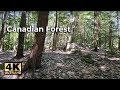 NATURE SOUNDS FOR 1 HOUR - CANADIAN FOREST BIRDS CHIRPING -  ..
