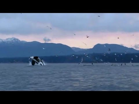 Video Discover Vancouver Island BC, Breathtaking Tourism video