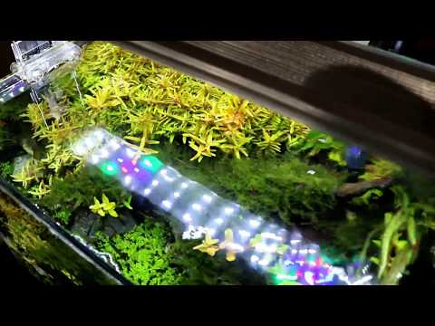 $28 ADA Style LED Aquarium Light Review — Better than Finnex or Twinstar?