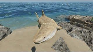 荒岛求生22:早上醒来发现一头虎鲨搁浅了,早餐有着落了