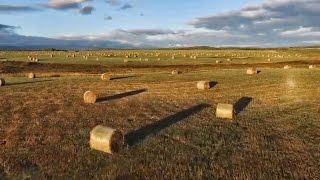 Morning Sun Kisses Bales Of Hay