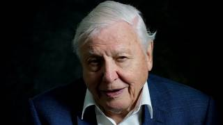 video: 'Human beings have overrun the world,' says Sir David Attenborough in trailer for his new film