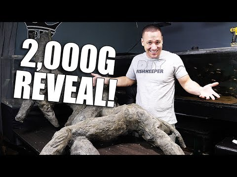 It's EXACTLY what I wanted! 2,000G AQUARIUM scape reveal!!