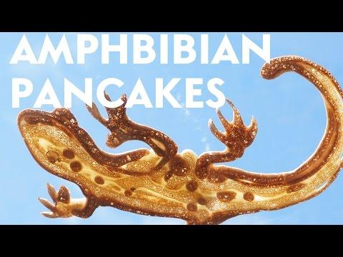 Amphibian pancakes! [ Pancake Art ]