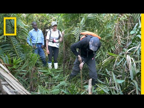 Peatlands Critical In Climate Change Fight | National Geographic